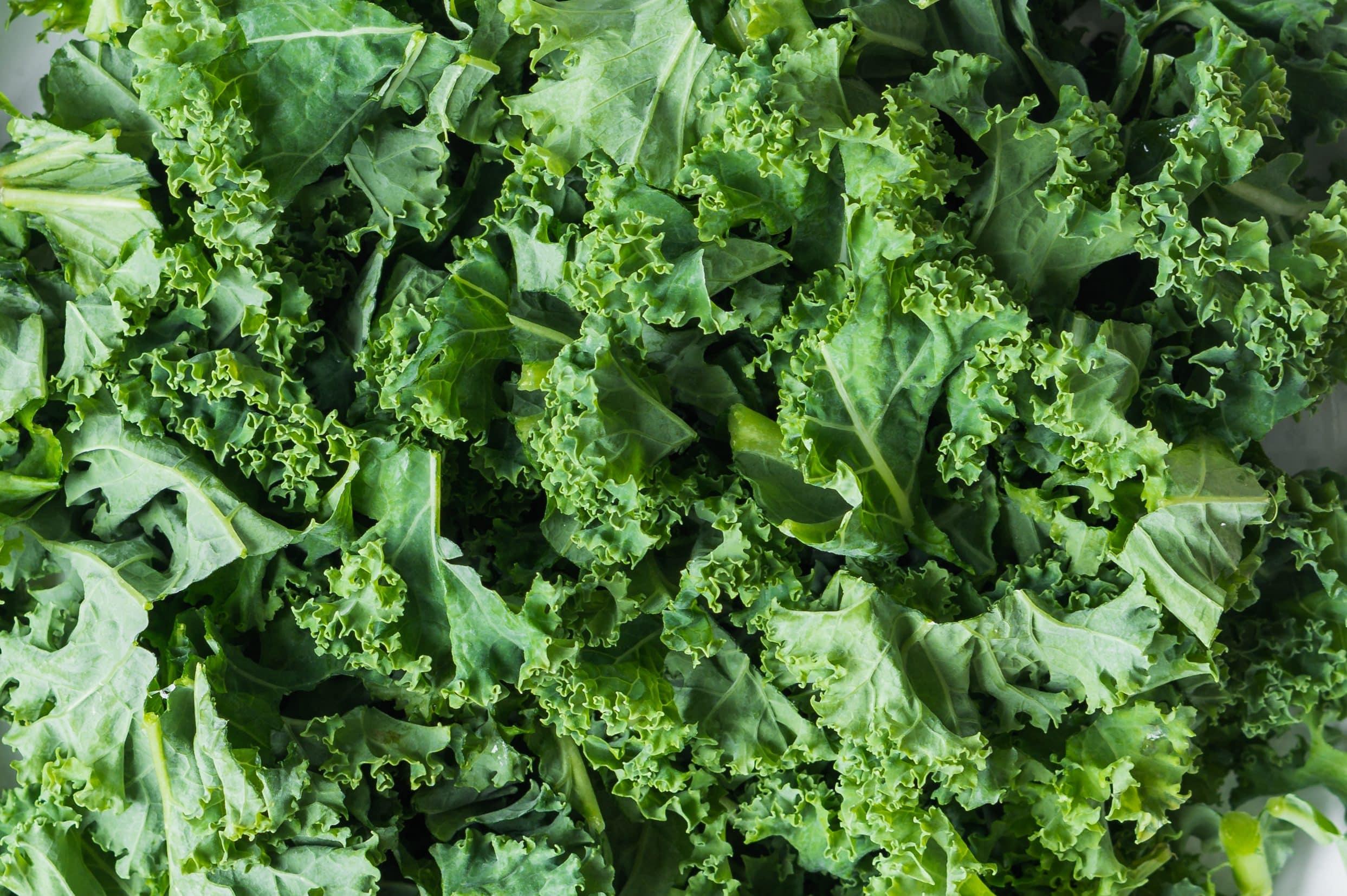 Chou Kale ou Chou vert frisé